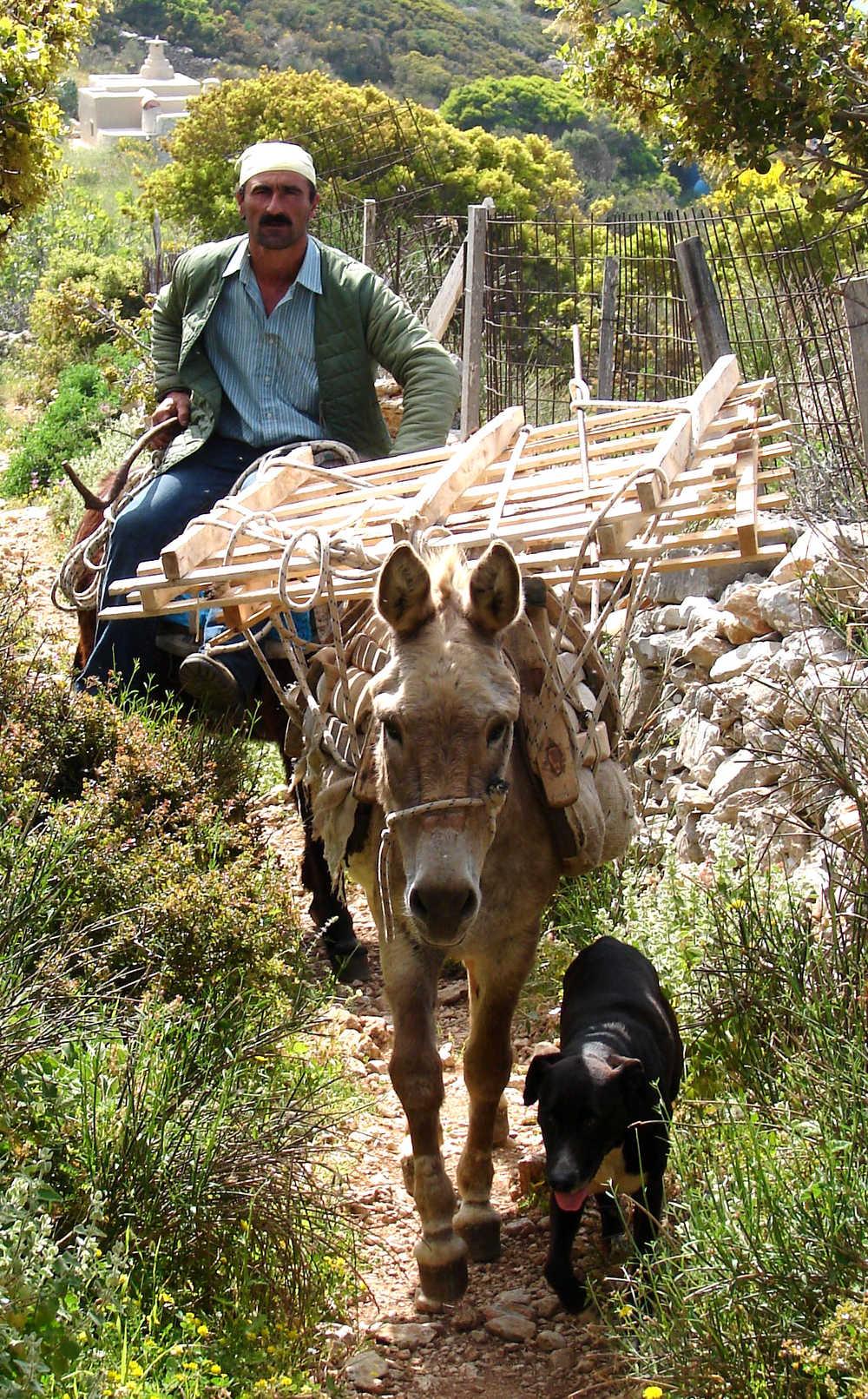 âne monté par un grec, Amorgos