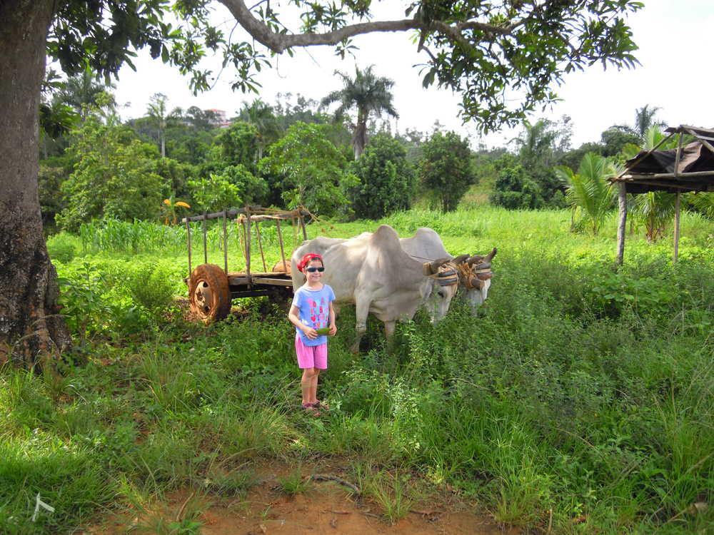Enfant devant un char à bœufs à Vinales