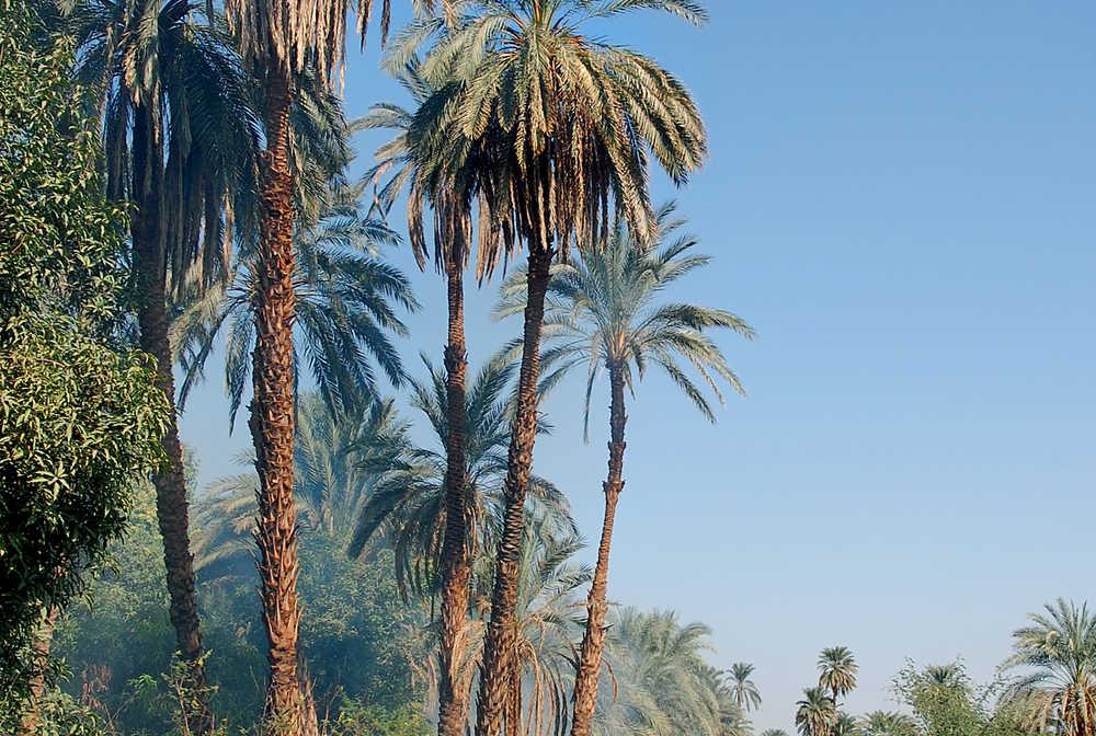 Randonnée dans les champs bordant le Nil en Egypte