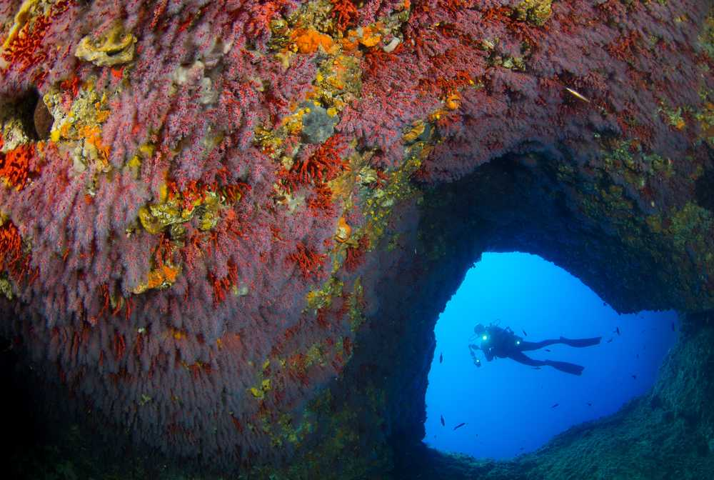 Voûte corallienne en Méditerranée