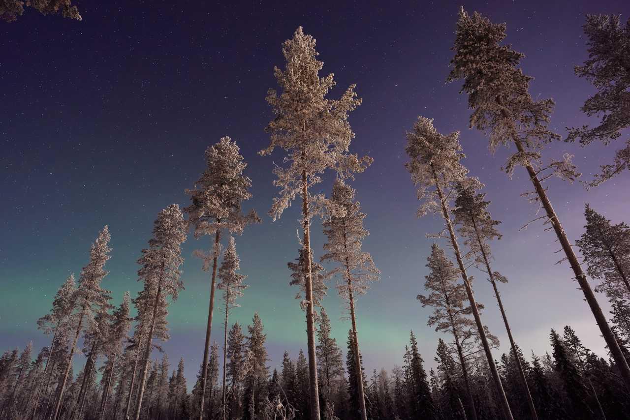 Aurores boréales en Laponie l'hiver