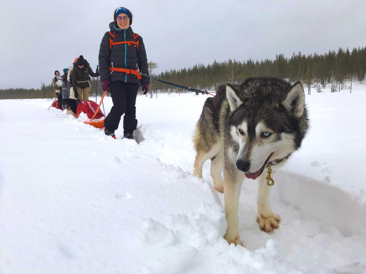 Cani-rando en raquettes avec nos huskies