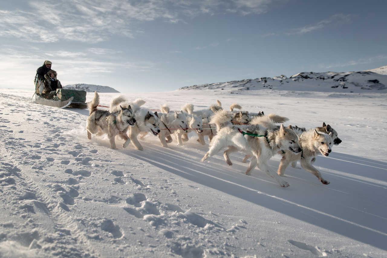 Chien de traîneau au Groenland l'hiver