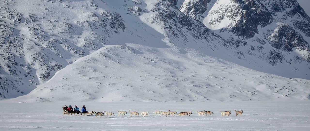 Chien de traineau en Arctique, au Groenland