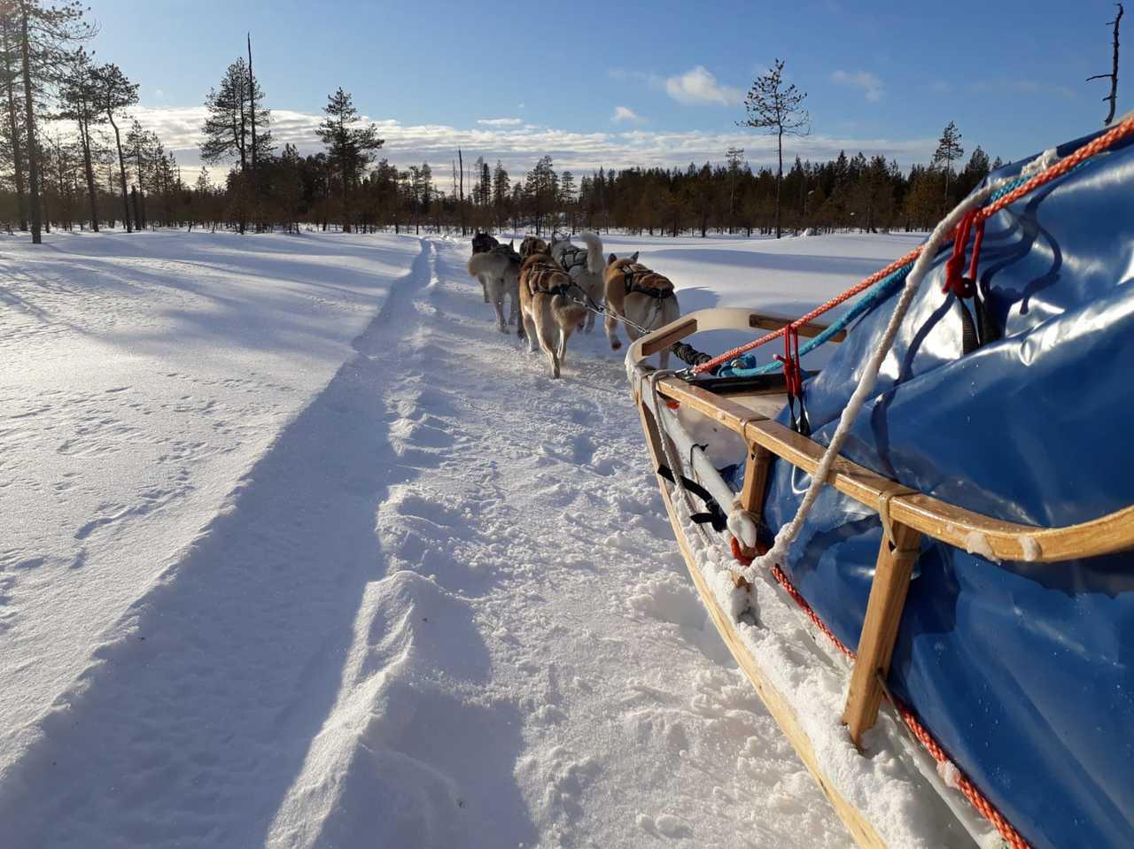 Chien de traineau sur le lac, Finlande