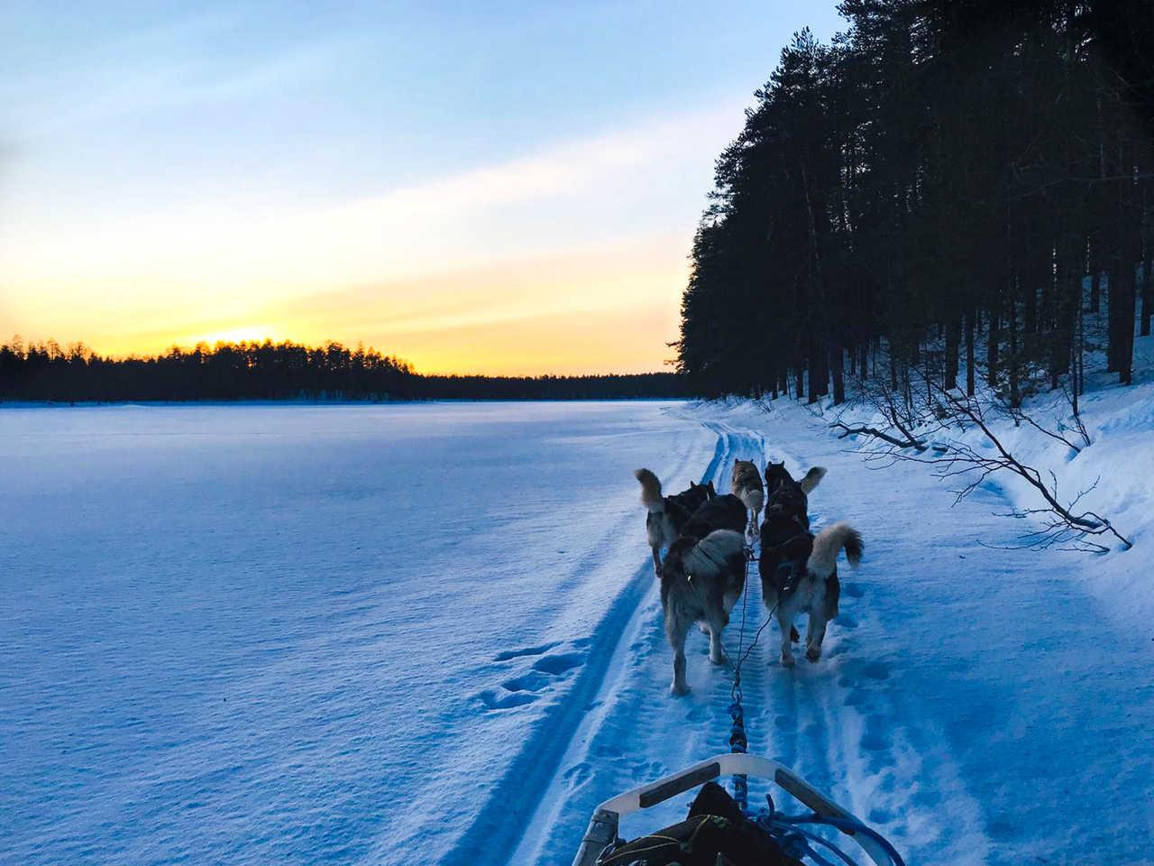 Chien de traîneau sur le lac gelé