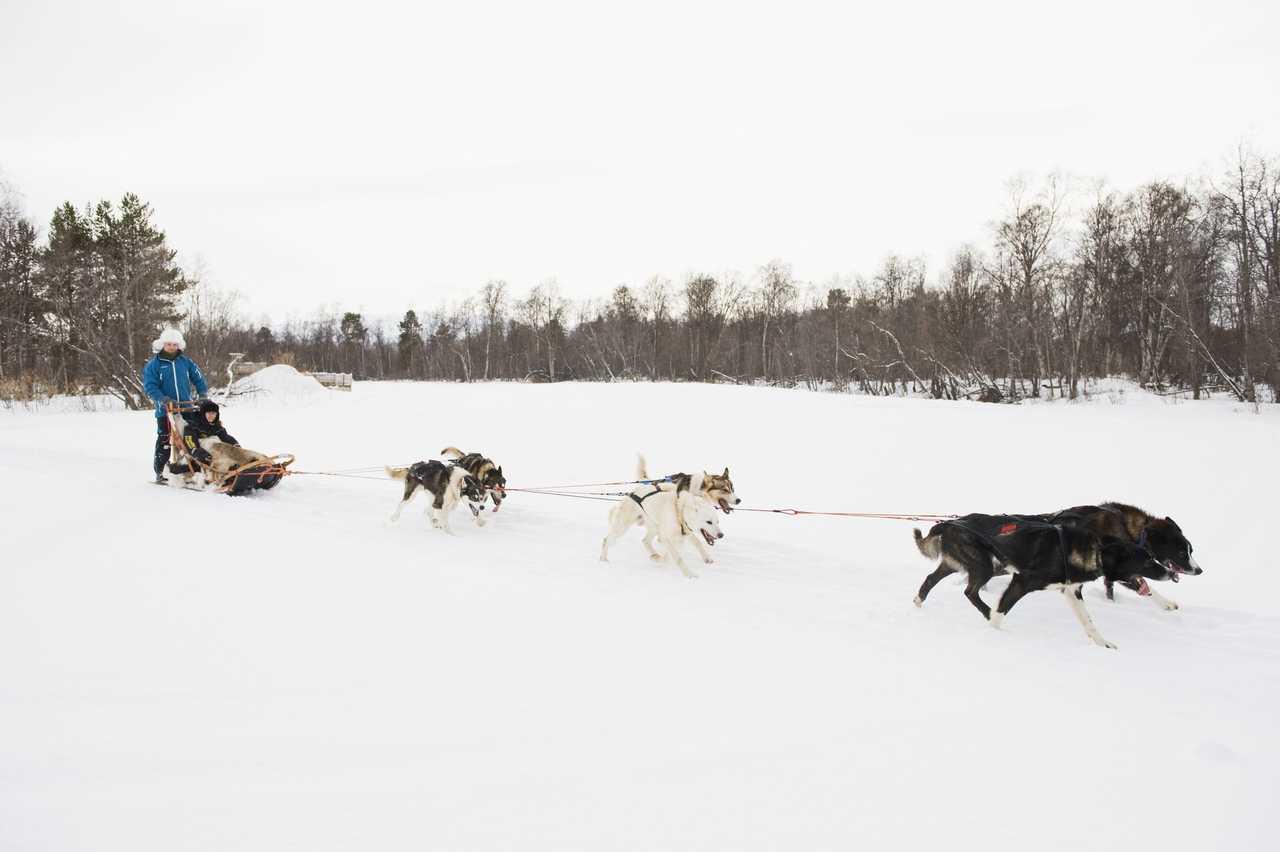 Chiens de traineau dans la neige