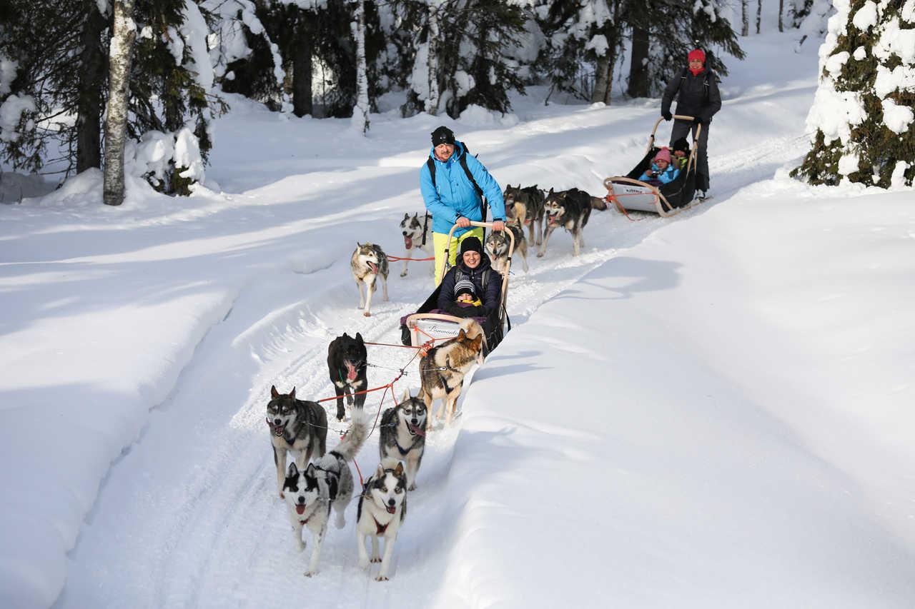 Chiens de traineau en famille en Laponie