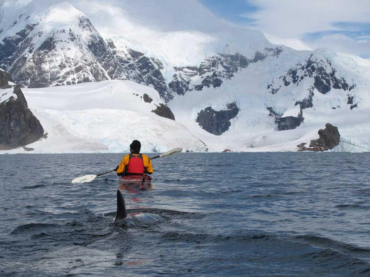 Photo d'un kayak lors d'une croisière polaire en Antarctique