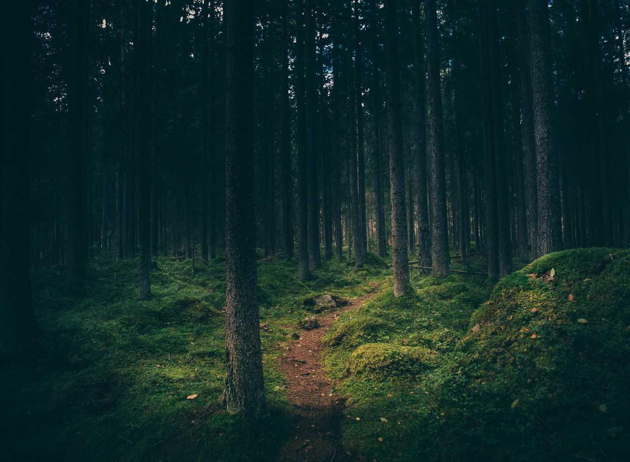 Forêt de Suède