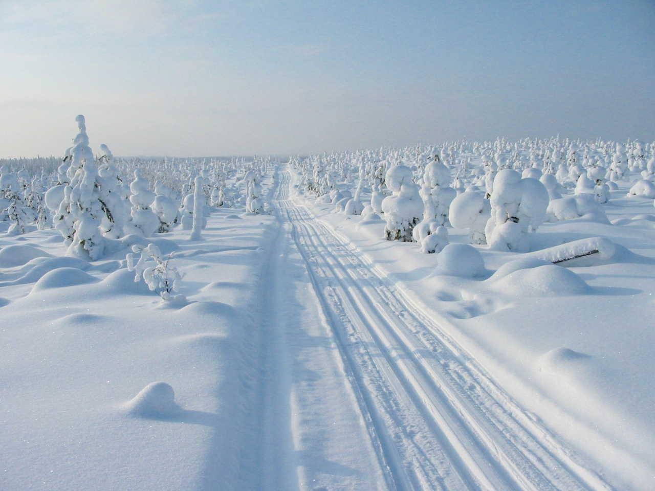 Laponie sous la neige