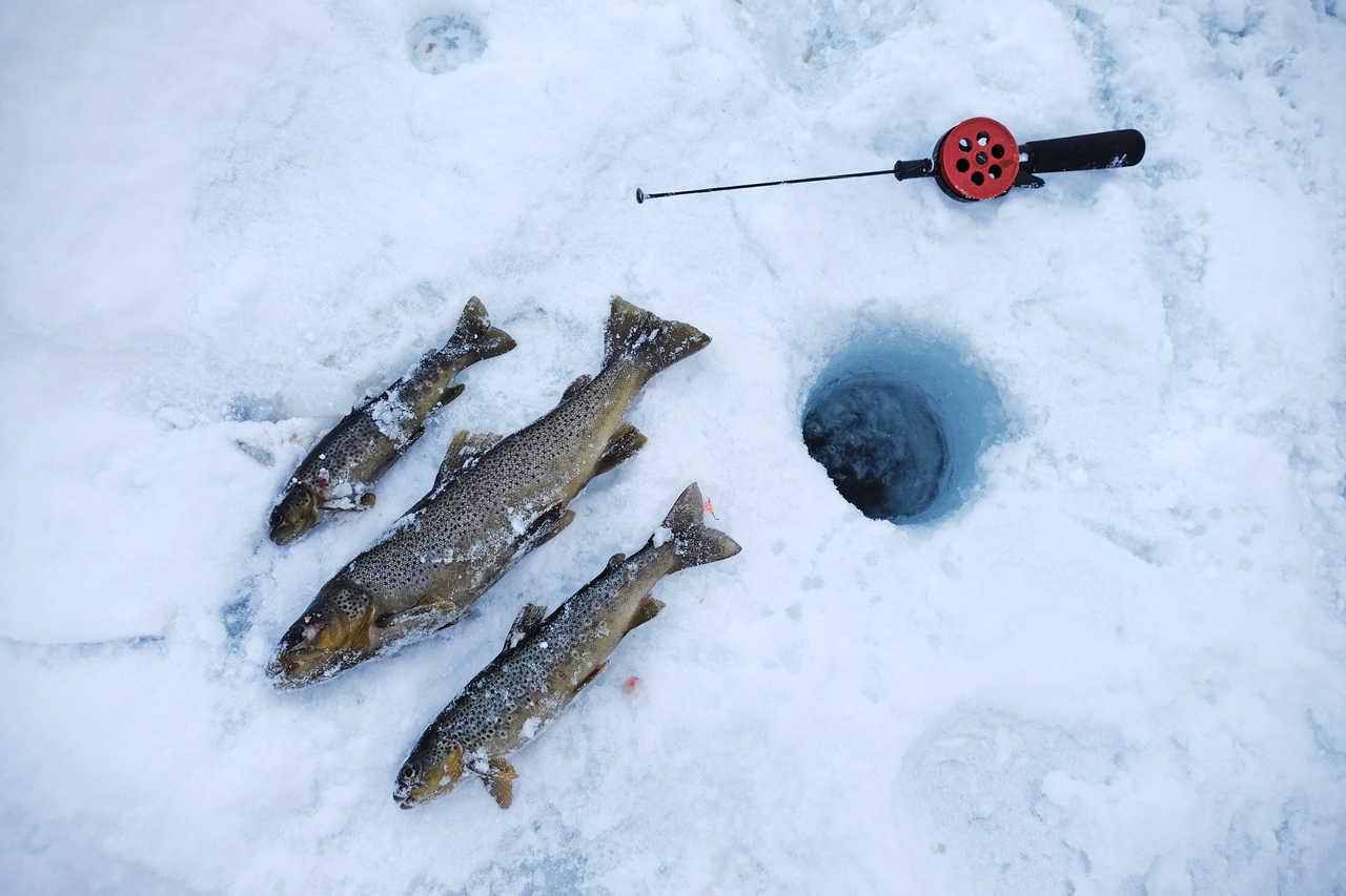pêche blanche lors d'un voyage en Norvège