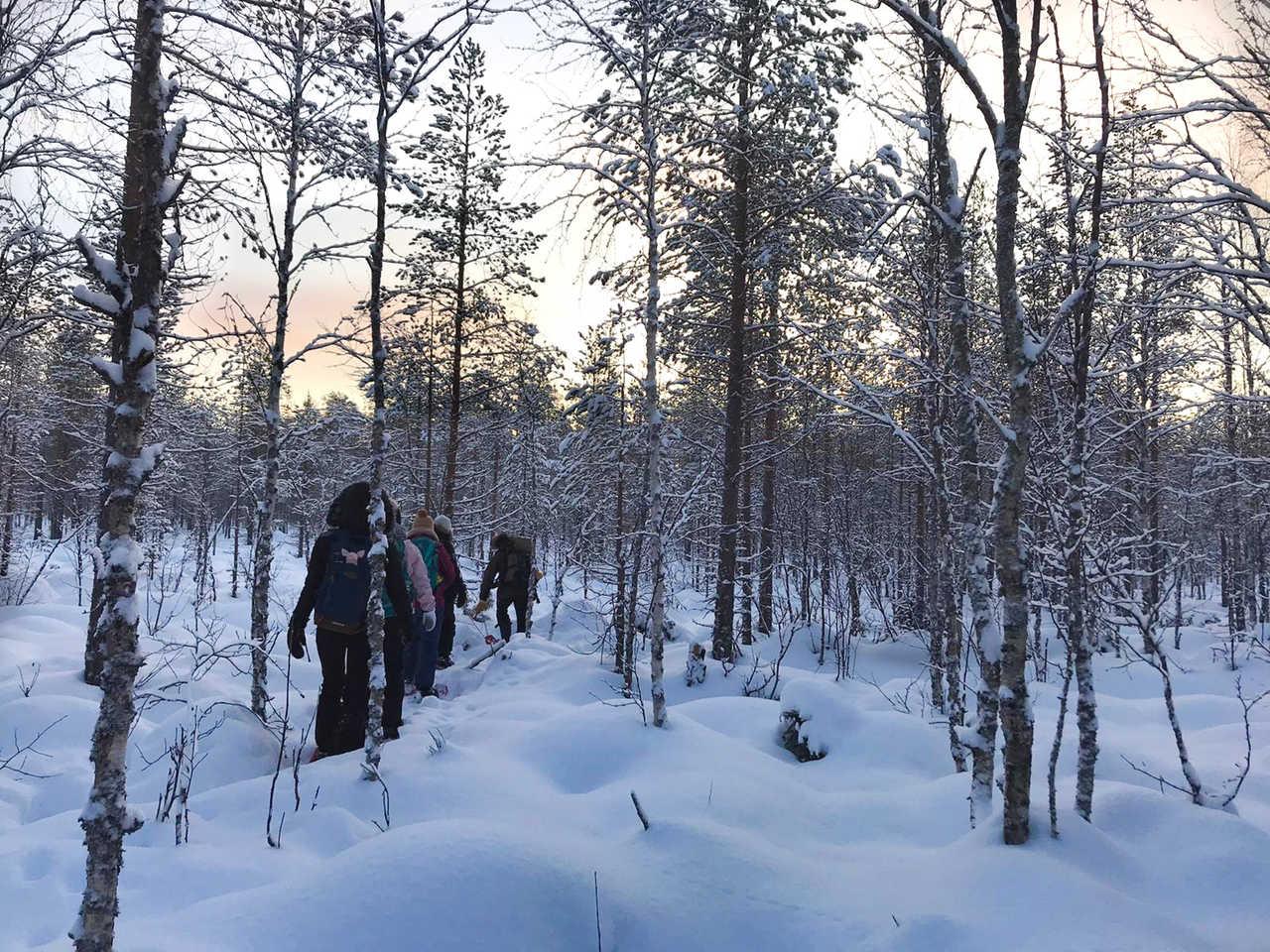 Randonnée dans la forêt