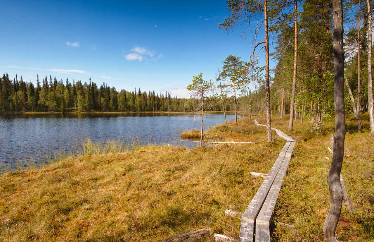 Randonnée dans la taïga de Finlande l'été