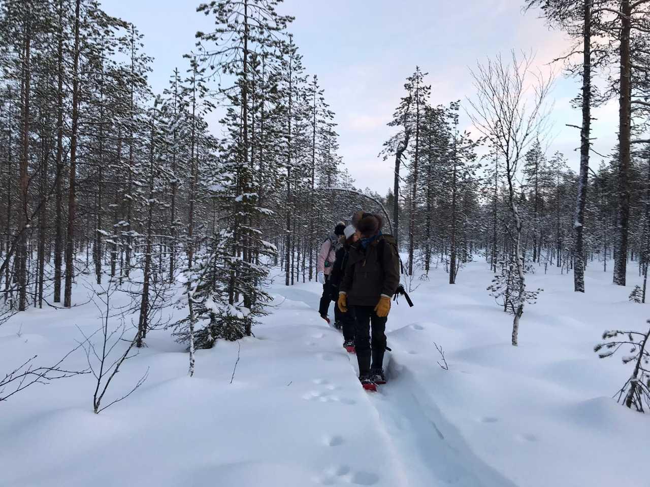 Randonnée dans la taiga finlandaise