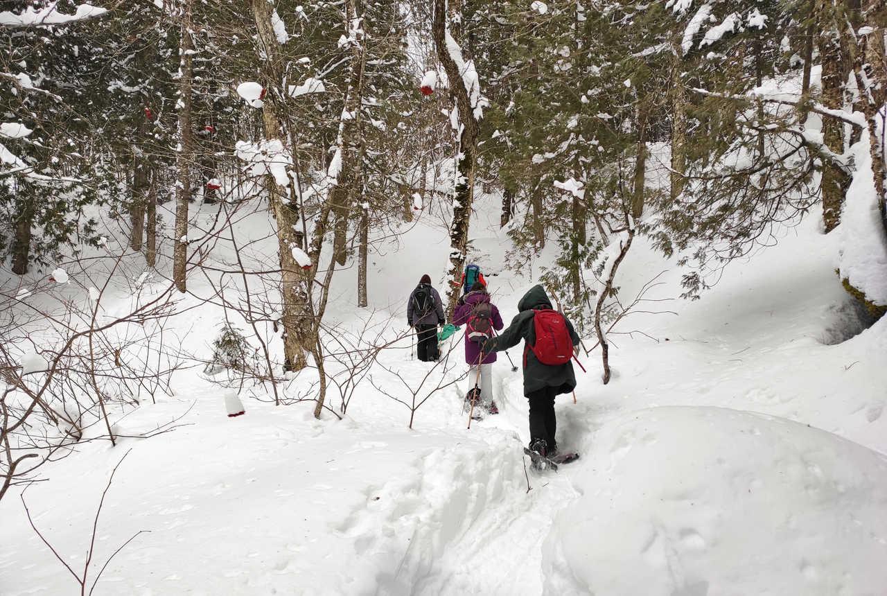Raquettes à neige au Québec l'hiver