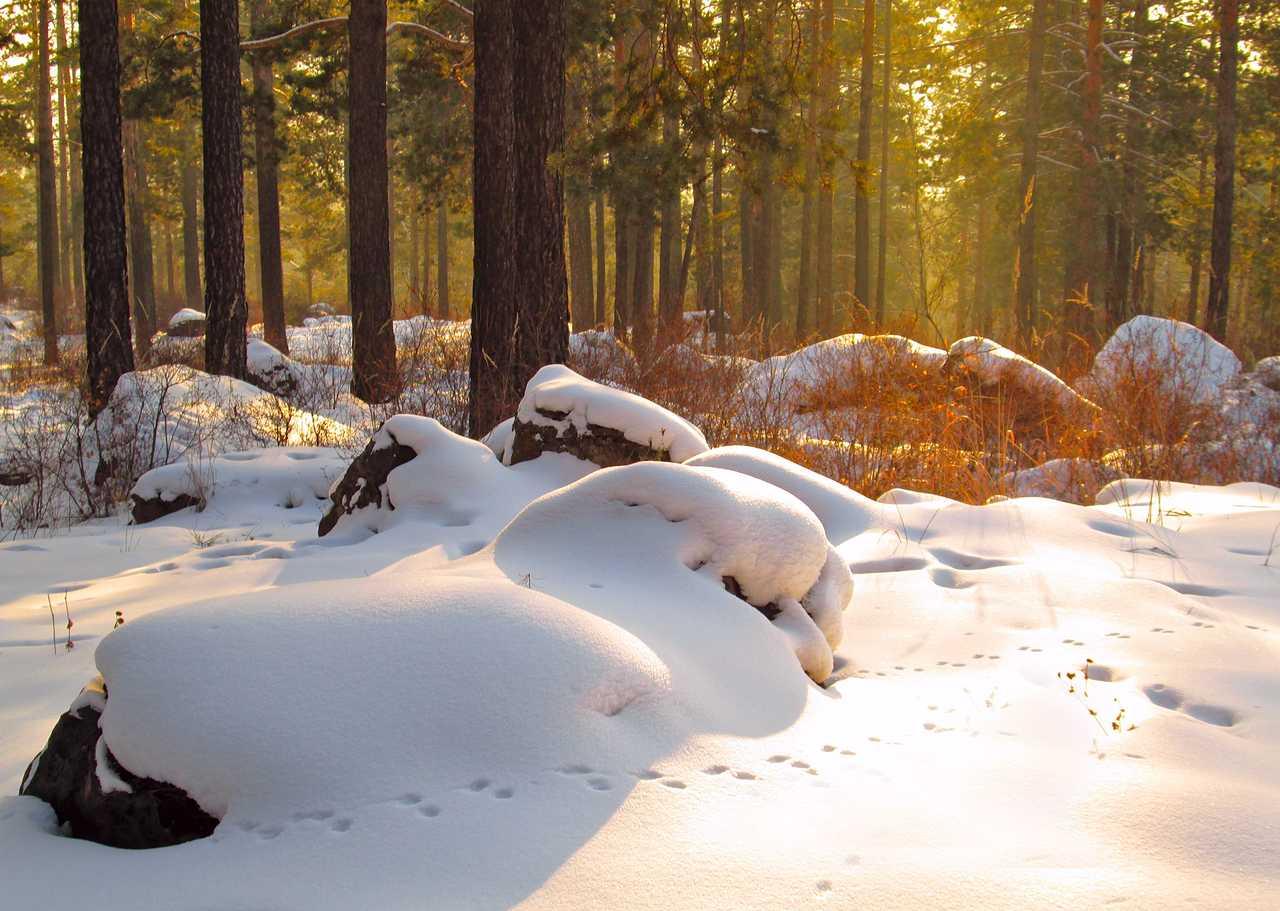 Traces de pattes dans la neige