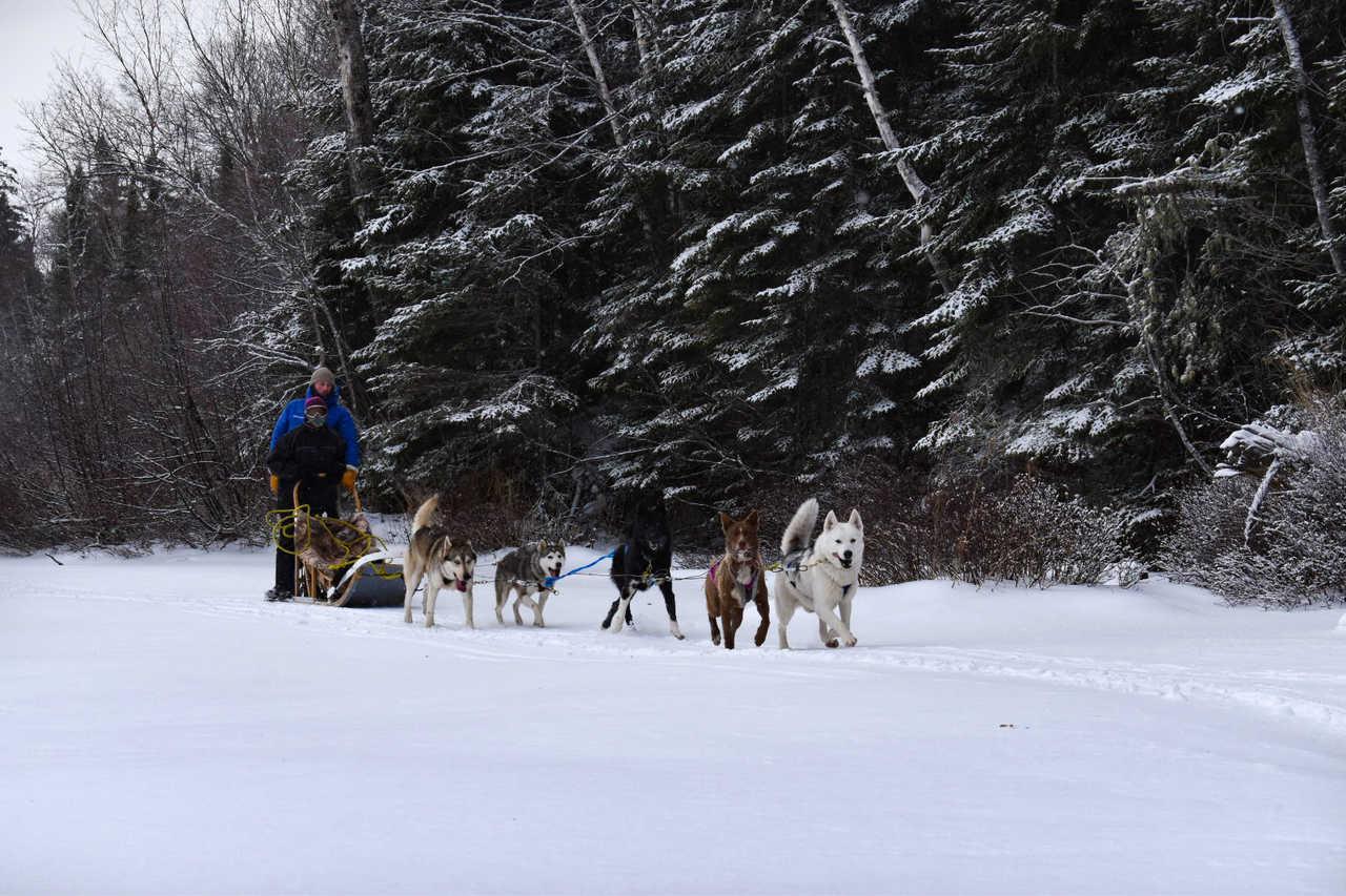 Traîneau à chiens en hiver