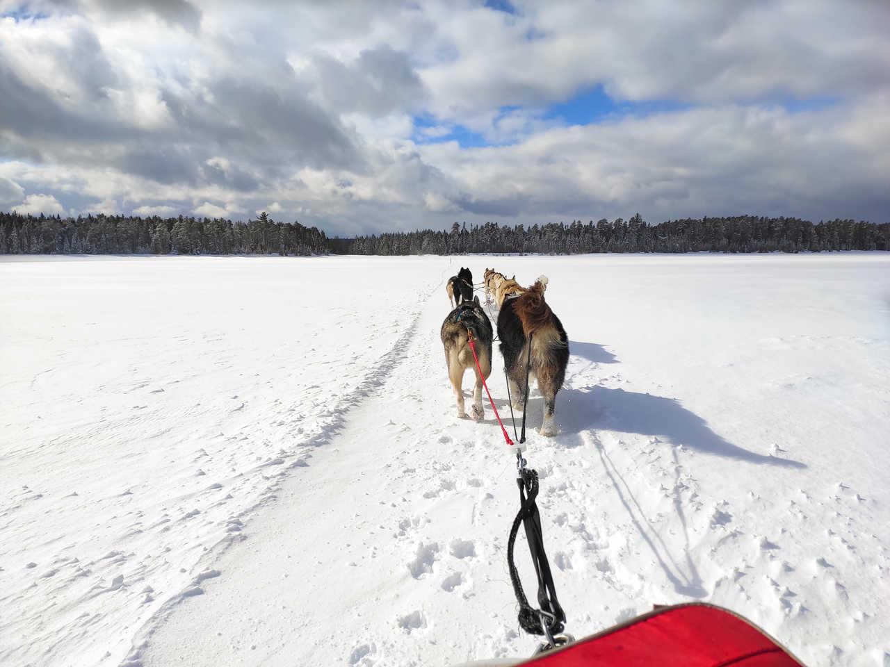 Traineau à chiens sur le lac Taureau gelé