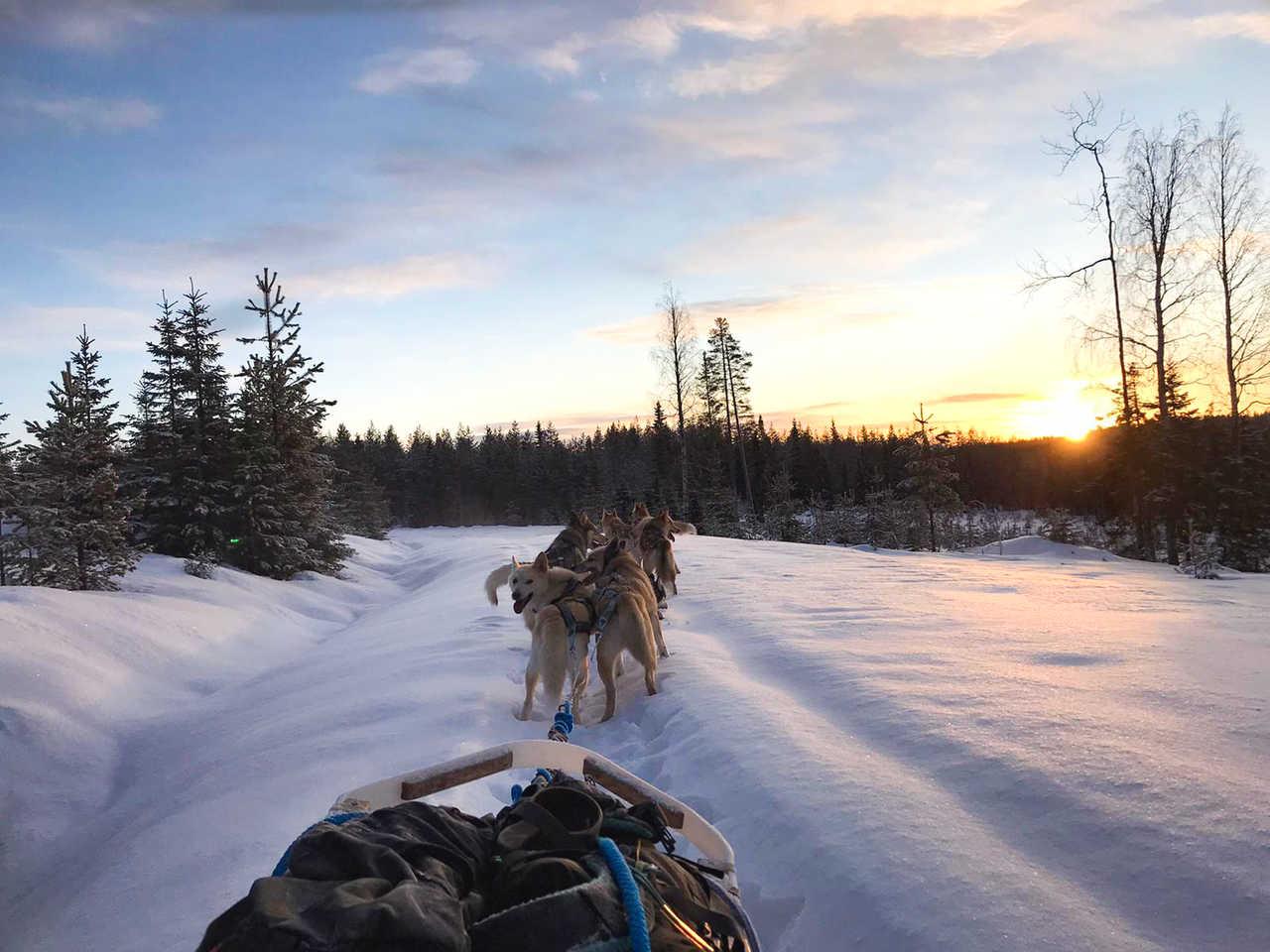 Traineau en Laponie
