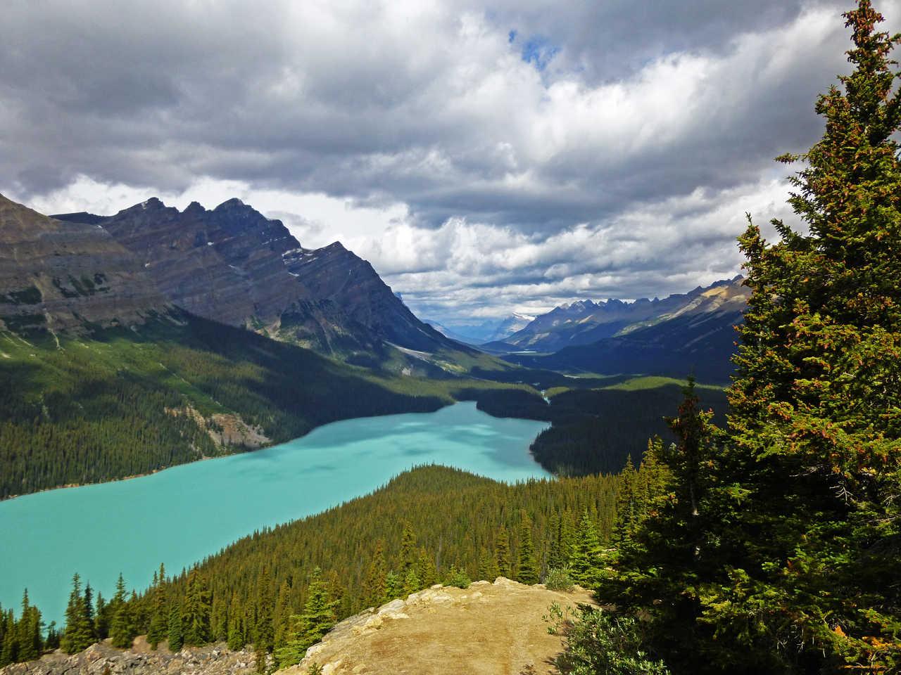 Vue sur le lac Peyto dans les Rocheuses Canadiennes