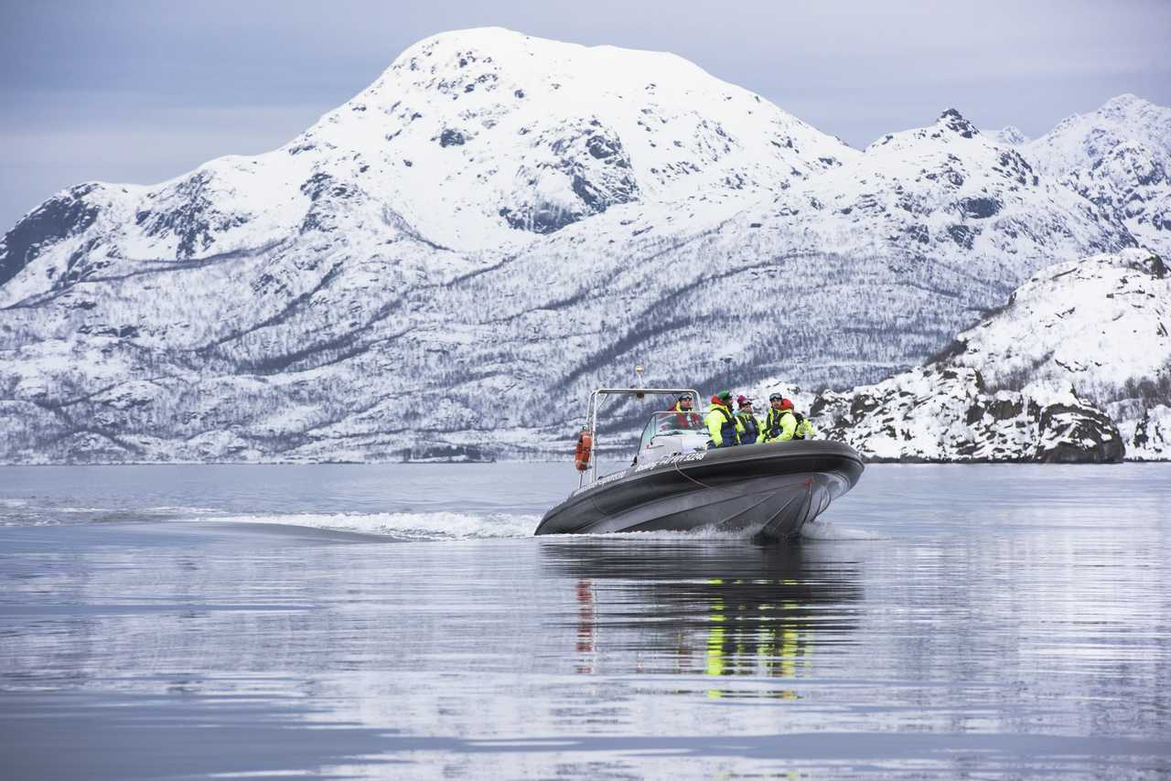 Whale watching Norvège