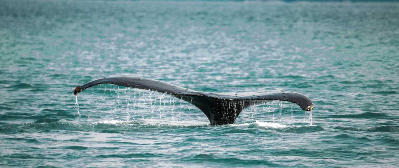 Photo baleine Alaska