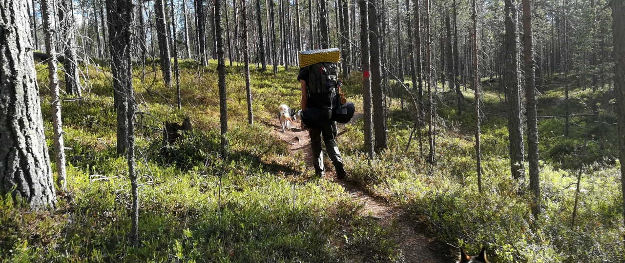 Cani-rando en Finlande l'été