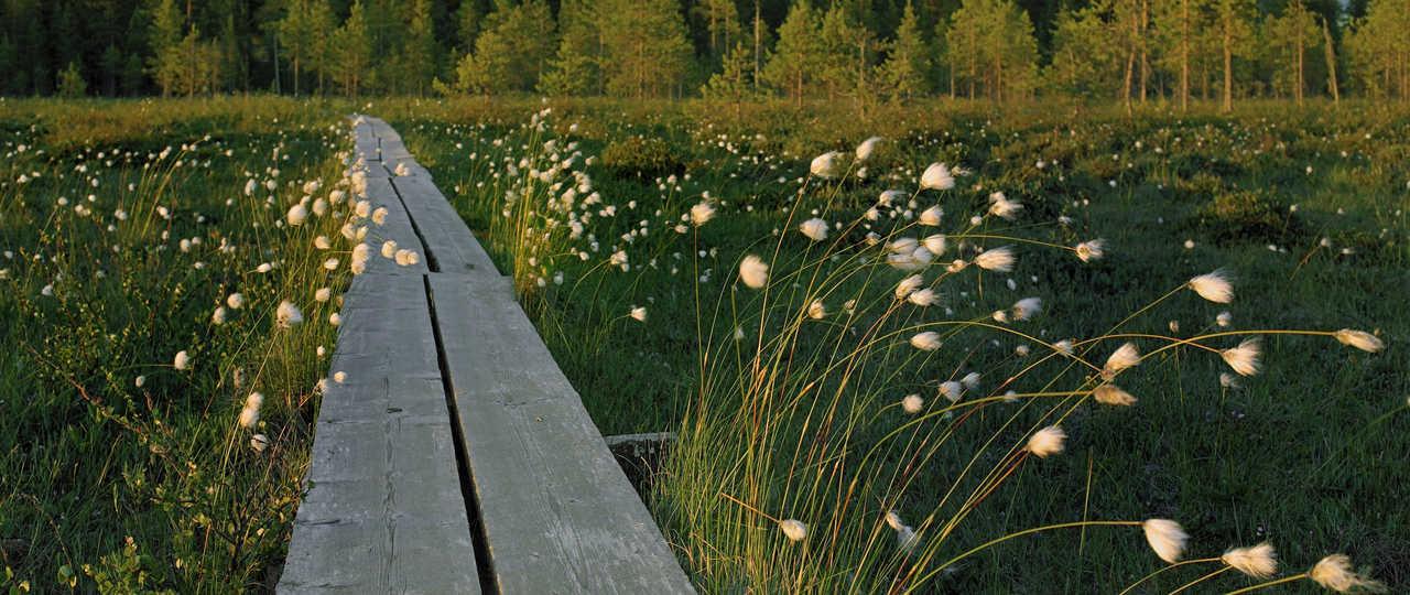 Chemin de randonnée en Finlande