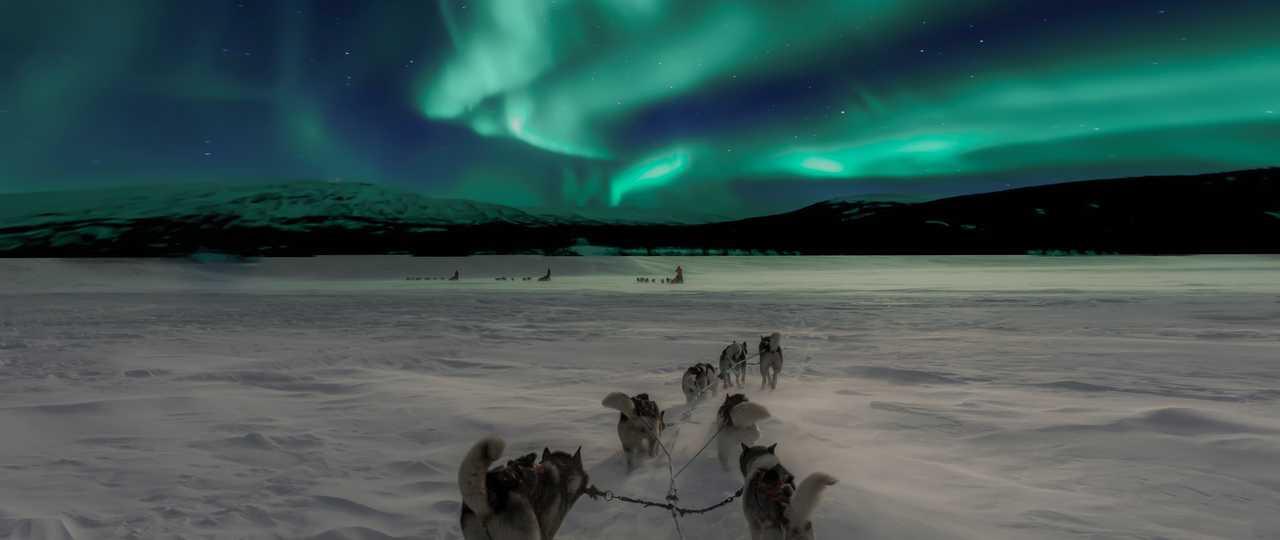 Chien de traineau sous les aurores boréales