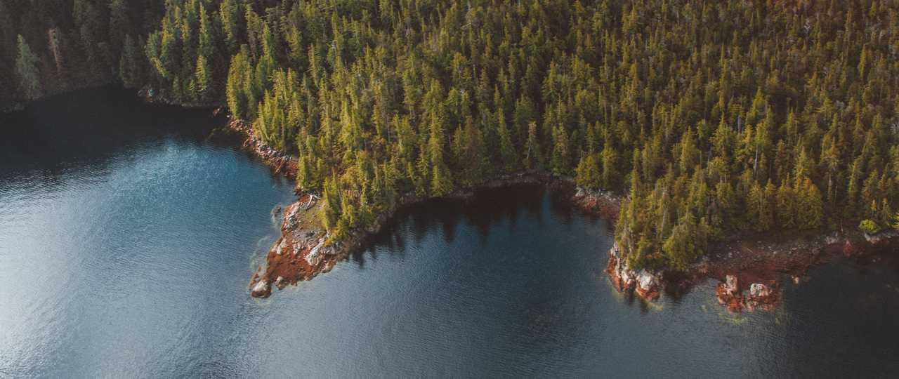 Photo forêt Alaska