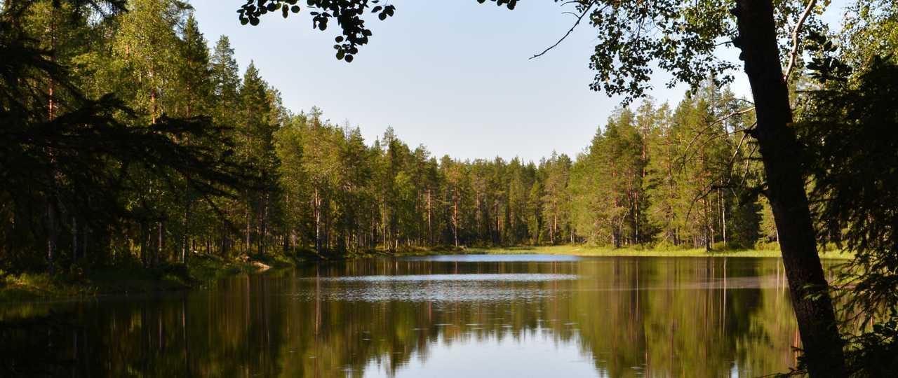 Foret de Finlande l'été