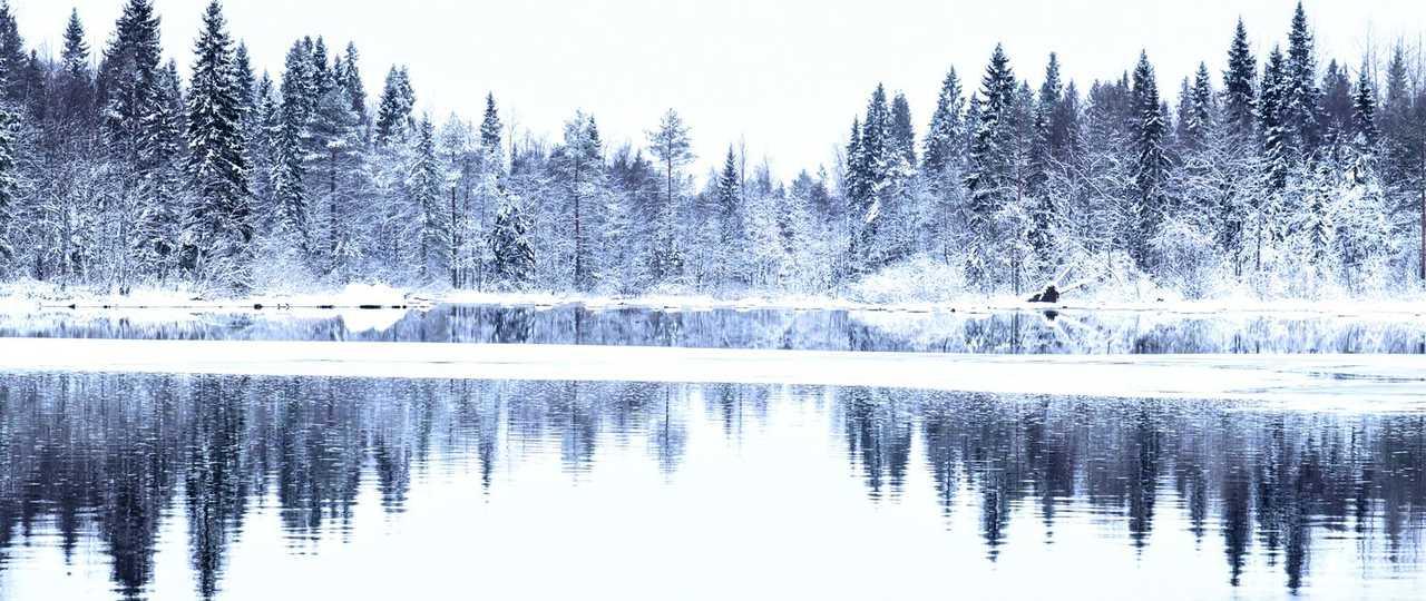 Forêt de Finlande, paysage Laponie