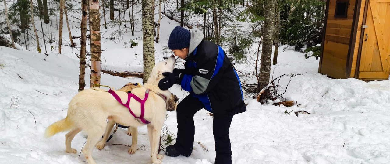 Huskies chien de traîneau du camp Taureau