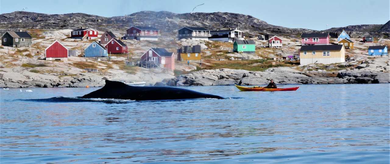 Kayak de mer avec les baleines au Groenland, Arctique
