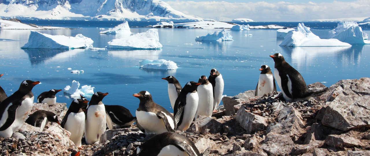 Manchots en Antarctique observés lors d'une croisière