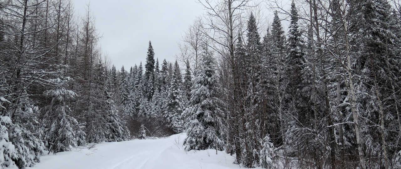 Paysage enneigé Québec