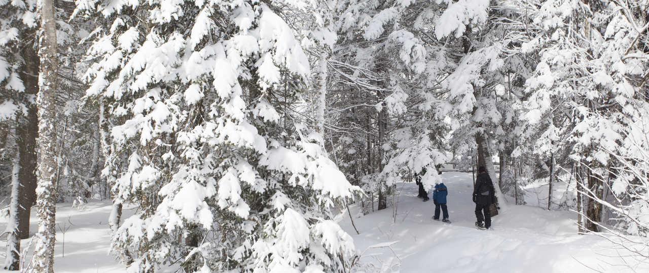 Randonnée raquettes dans la neige au Québec