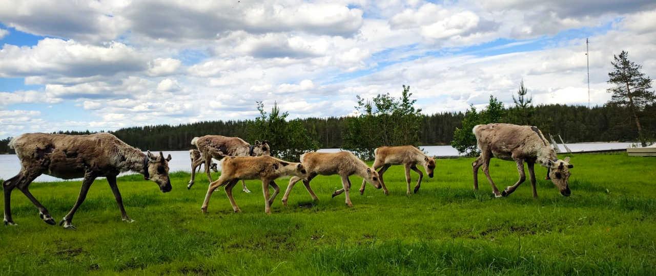 Rennes en Laponie l'été, Finlande