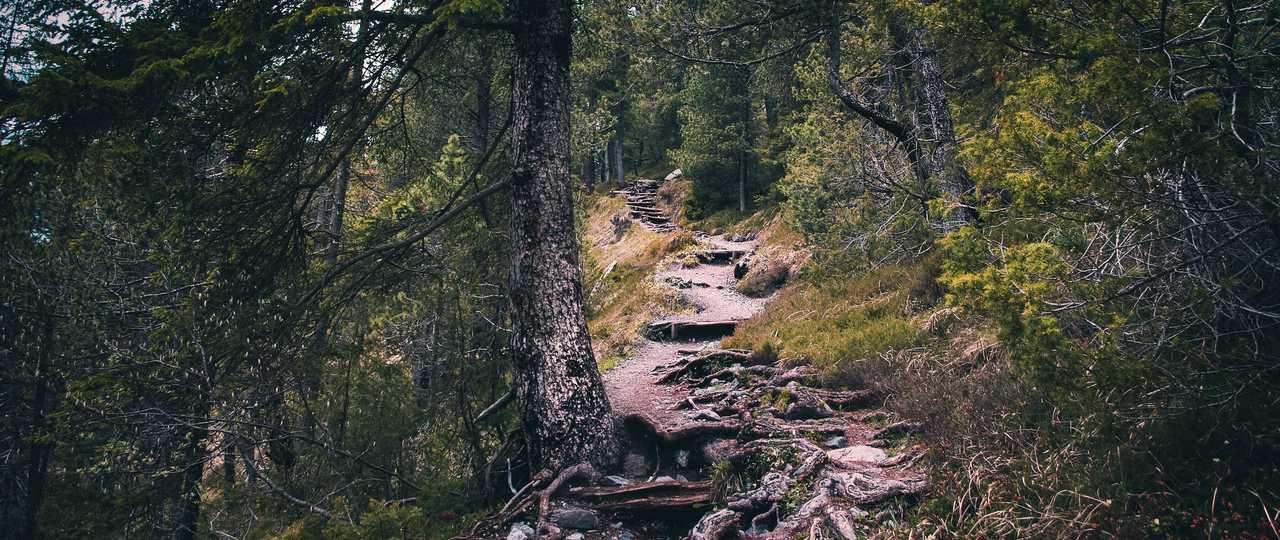 Sentier de forêt au Québec