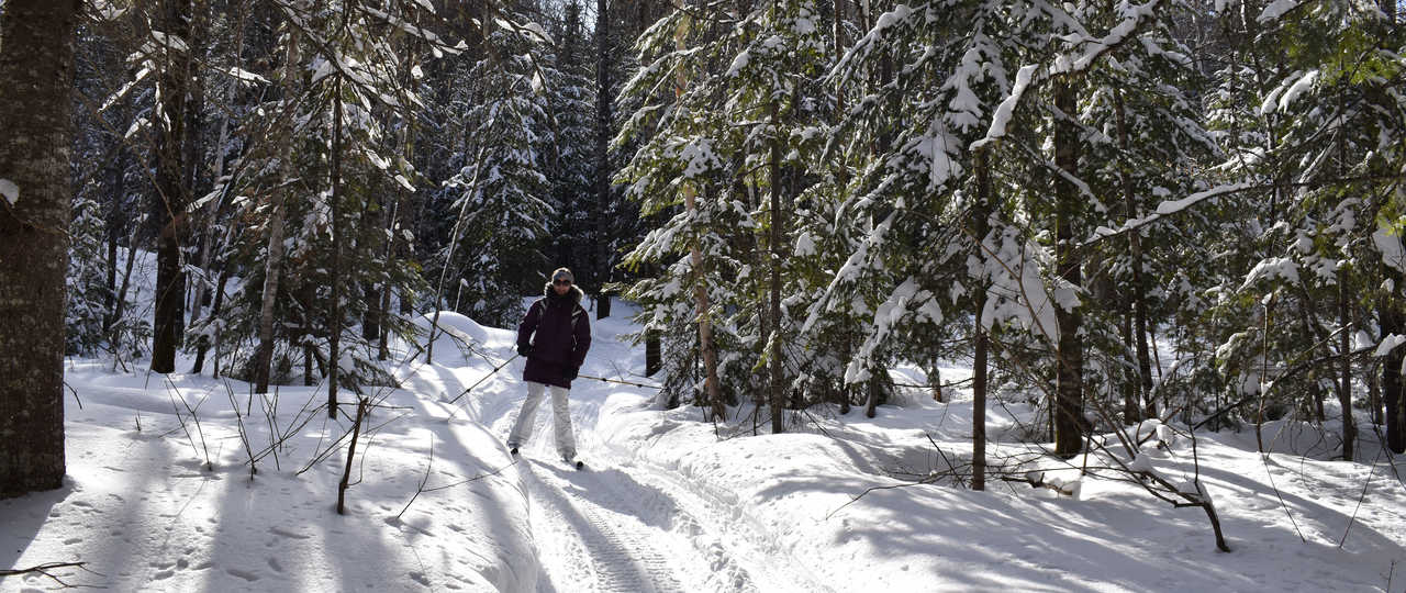 Ski de fond dans la taiga au Québec