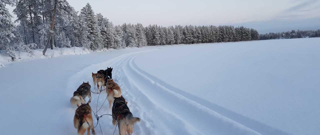 Vacances en chien de traineau en Finlande