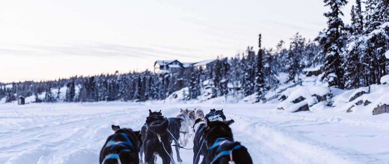 Voyage chien de traîneau au Canada