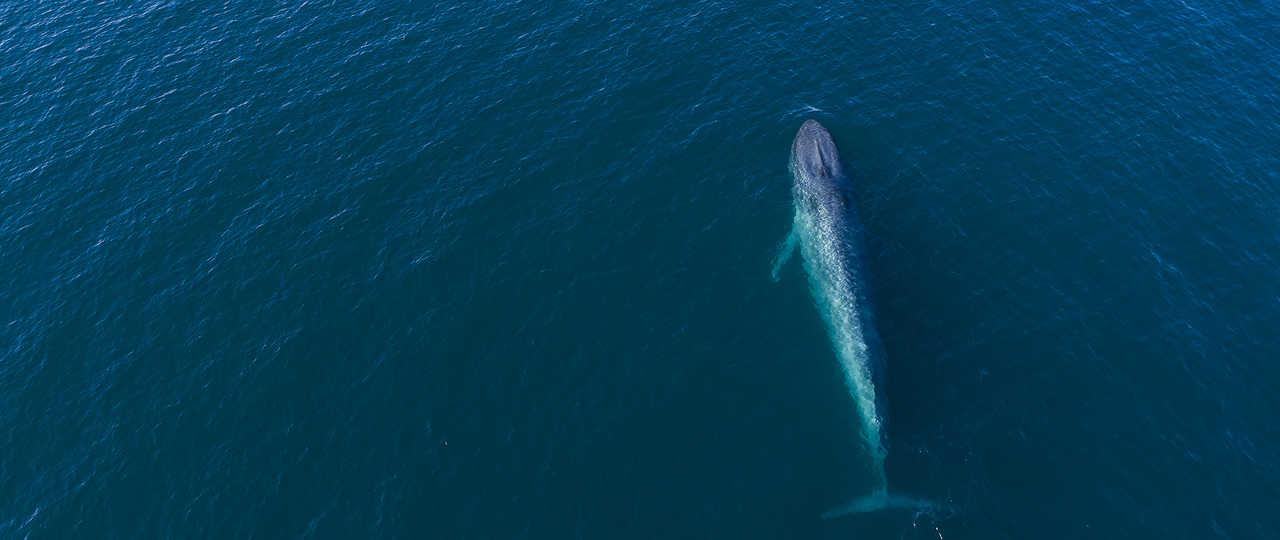 Photo d'une baleine lors d'une croisière polaire