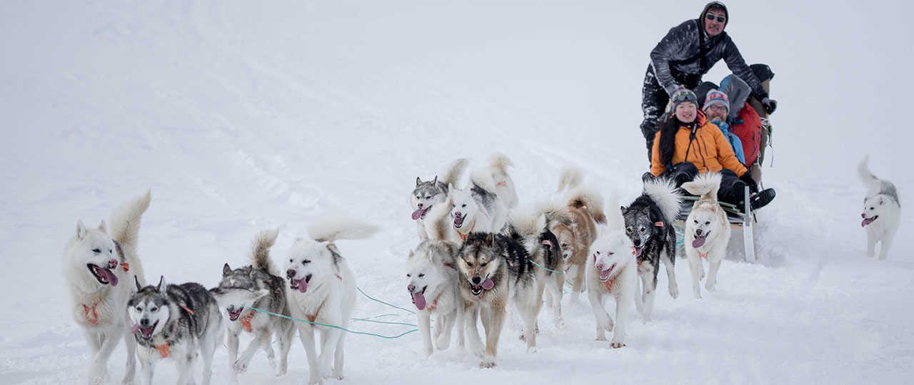 Voyage en chien de traineau au Groenland, côte Est