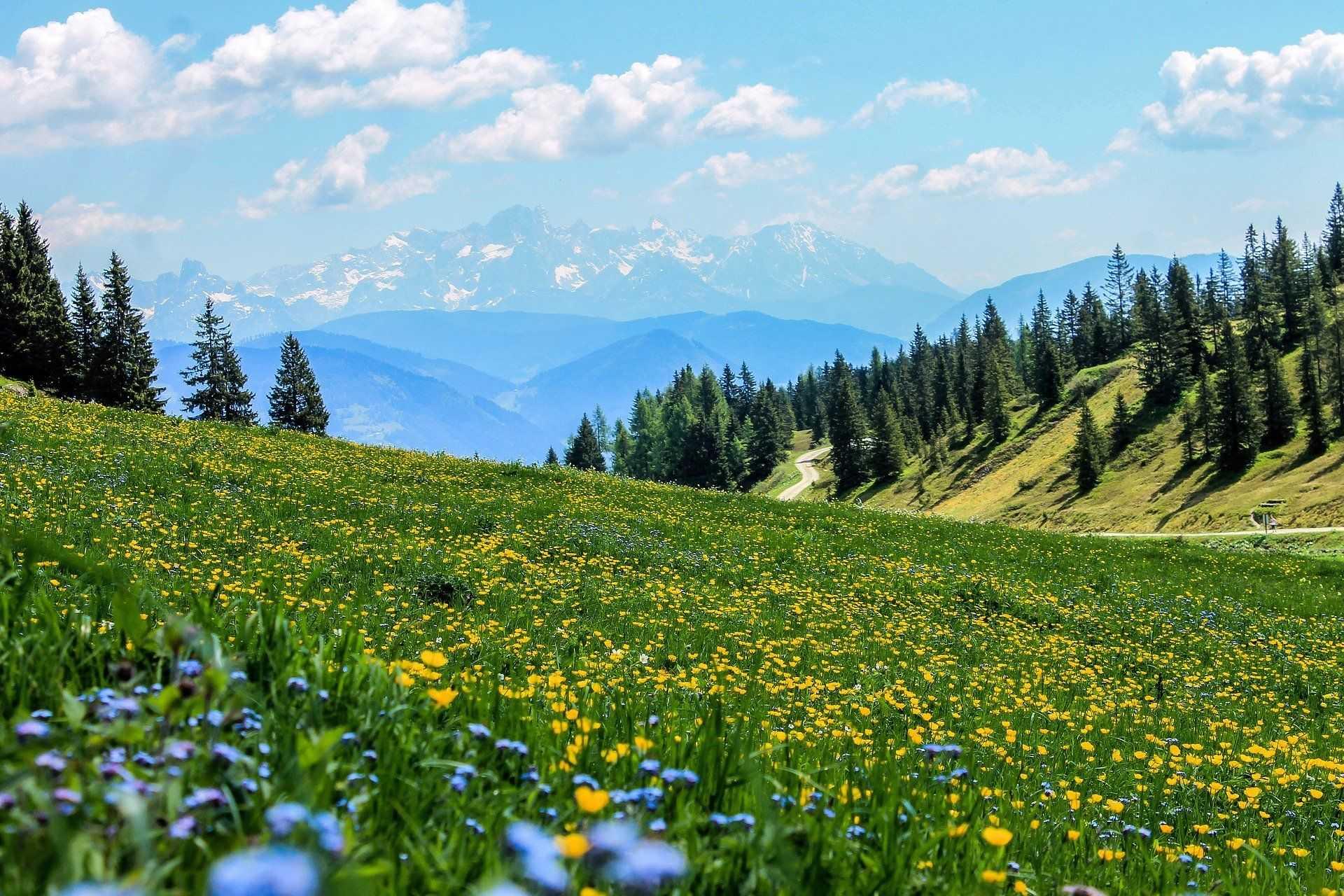 Alpages fleuris dans les montagnes du Queyras