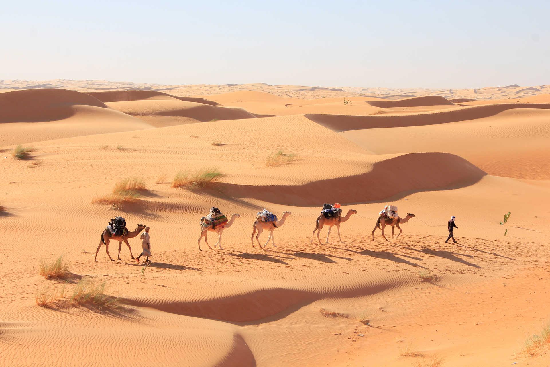 Caravane de chameaux dans le désert mauritanien