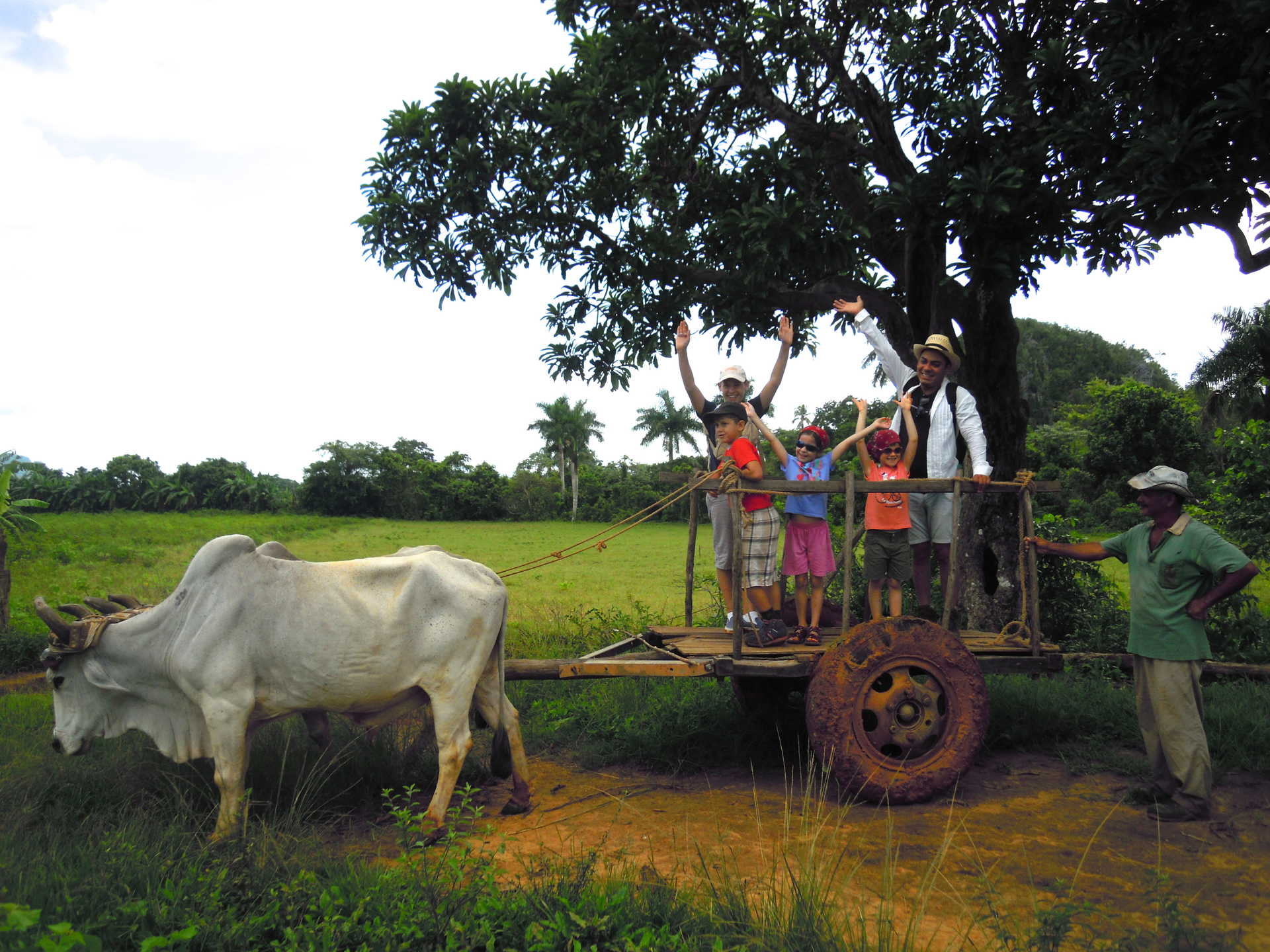 Cuba, Vinales, balade en char à boeuf