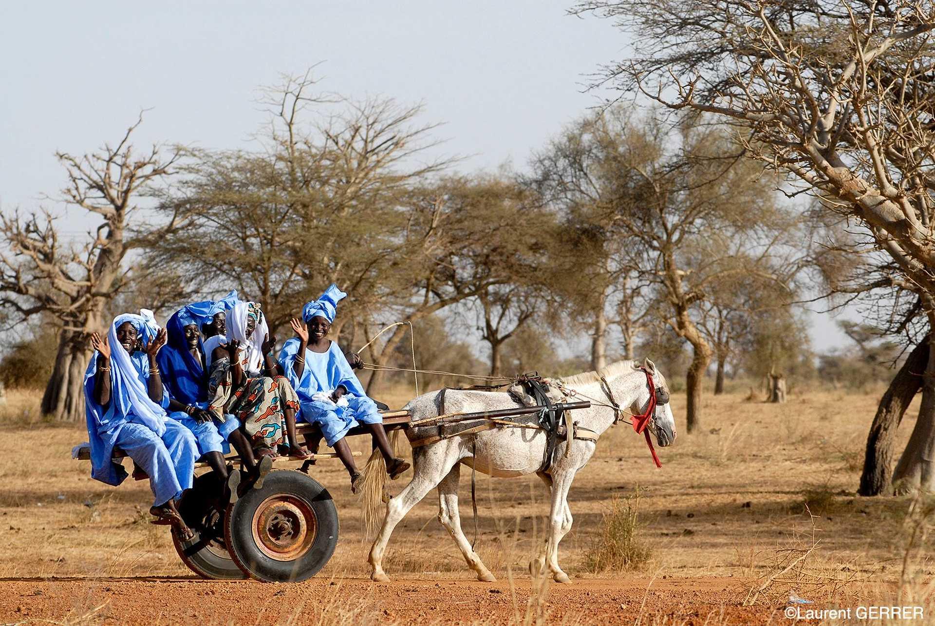 Charette dans la brousse sénégalaise