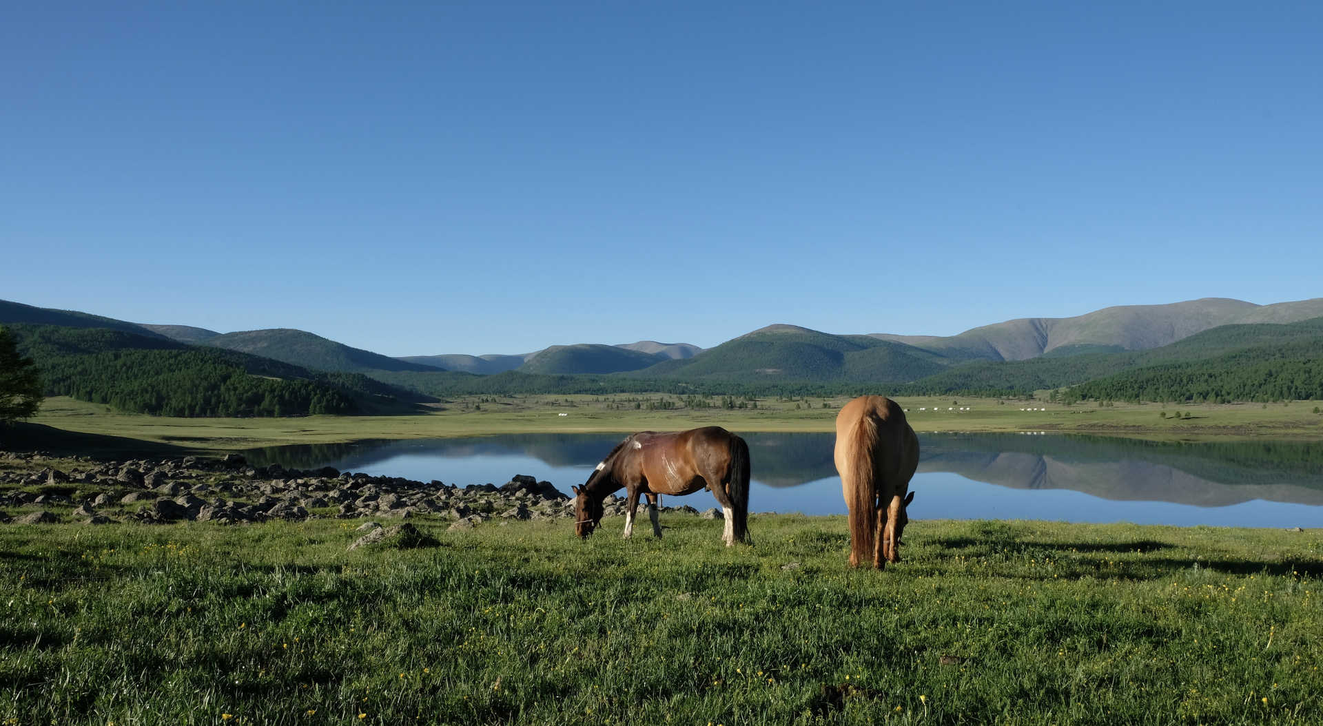 Chevaux, lac du nombril, Naiman Nuur